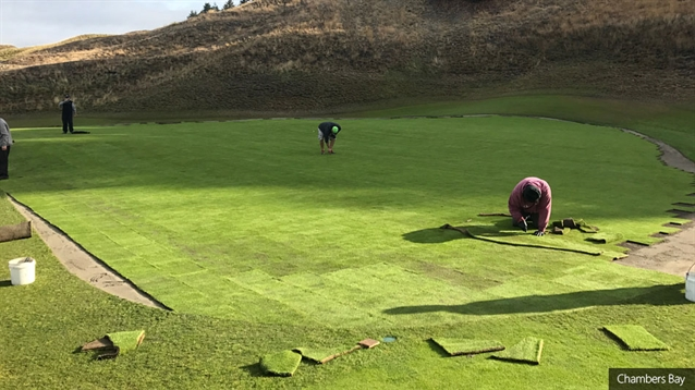 Chambers Bay welcomes new poa annua greens