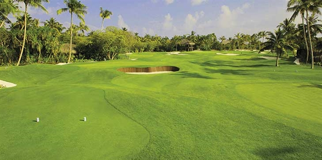 New seeded variety of seashore paspalum making an impact