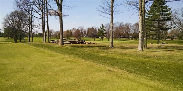 Wilczynski leads extensive tree management project at Warwick Hills